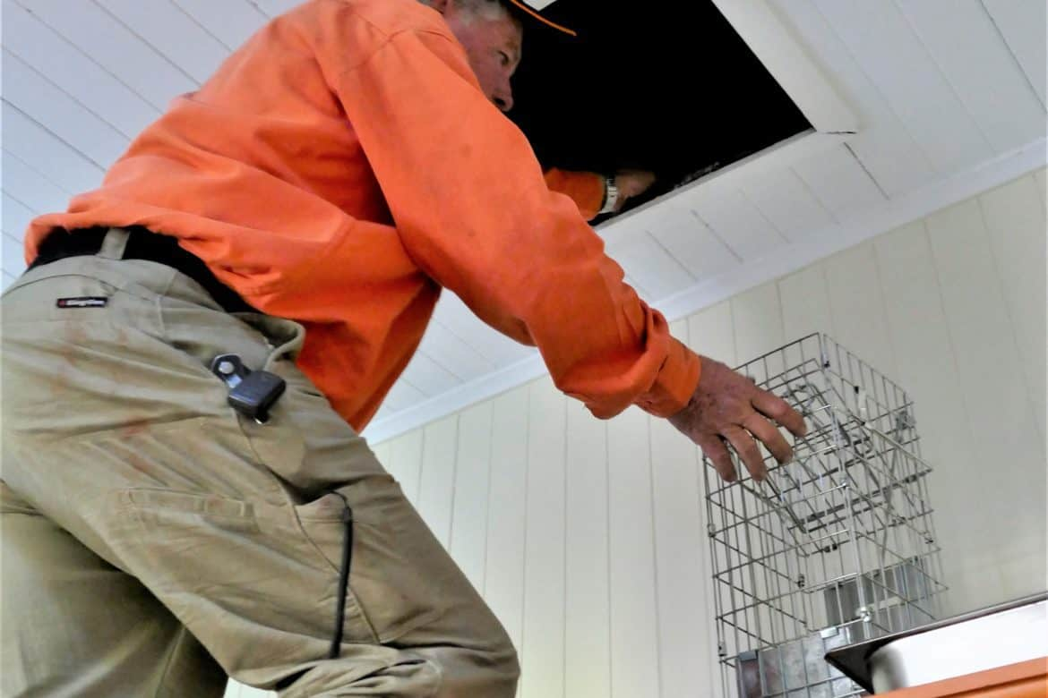 Arthur with Possum Removal Cage